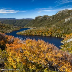 Turning of the fagus, nothofagus gunnii, Cradle Mountain - Lake St. Clair National Park, Tasmania.