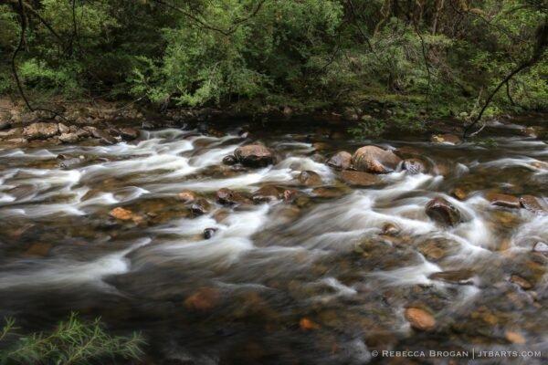Franklin River Franklin River Nature Trail Franklin Gordon Wild Rivers National Park Tasmania