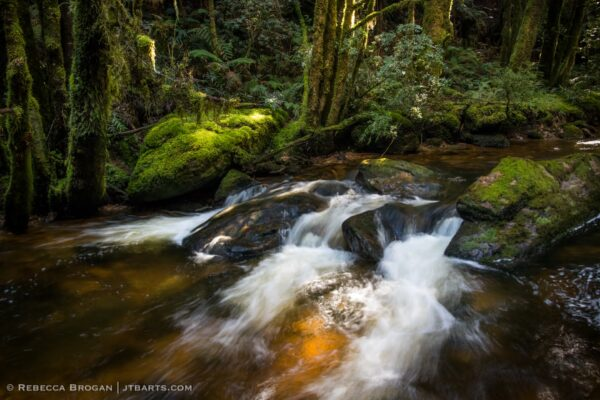 Nelson River, Nelson Falls Track, Franklin - Gordon Wild Rivers National Park, Tasmania.