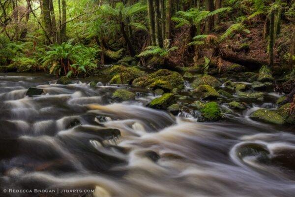 Nelson River and Tasmanian rainforest, Nelson River Falls Track, Tasmania.