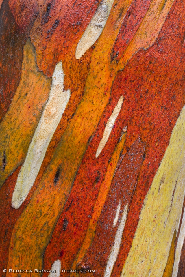 Snowgum Bark close up, Tasmania, Australia