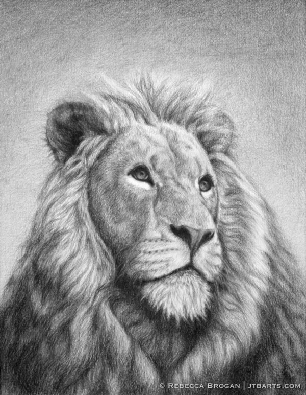 The Lion of Judah Christian artwork. The lion of the tribe of Judah drawing.