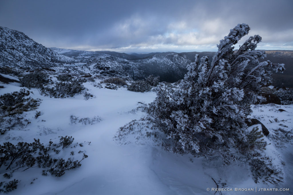 Tarn shelf walking track in snowy winter, Mt. Field National Park, Tasmania
