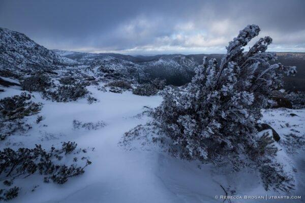 Tarn shelf walking track in snowy winter, Mt. Field National Park, Tasmania