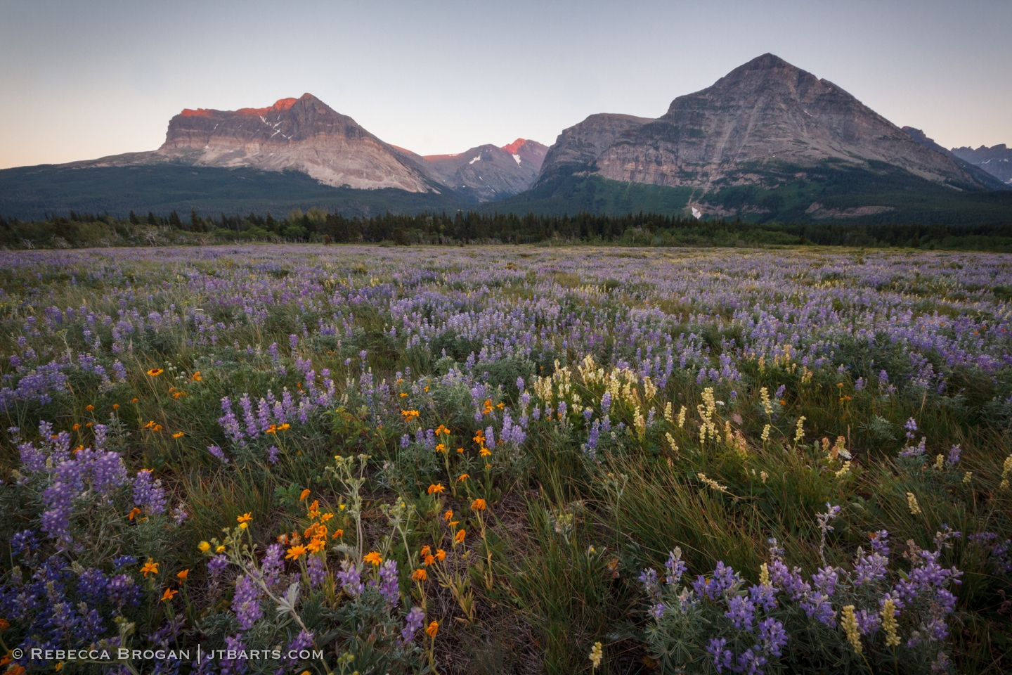 7) Wildflowers Evening 1 (Many Glacier, Glacier National Park) GNP29